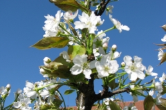 Stromy v květu