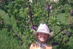 Stromy v plodu